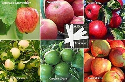 Organic Bulk 6 Apple Tree Seeds Survival Seeds 60+ Apple Seeds Upc 648620998033 + 6 Plant Markers Stocking Stuffers