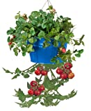 HIT 8399E B Galvanized Heavy Gauge Steel Hanging Tomato Herb Planter, 13.5 by 8-Inch, Blue For Sale