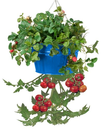 HIT 8399E B Galvanized Heavy Gauge Steel Hanging Tomato Herb Planter, 13.5 by 8-Inch, Blue