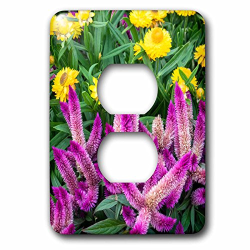 3drose-danita-delimont-flowers-yellow-strawflowers-and-purple-celosia-in-garden-usa-light-switch-covers-2-plug-outlet-cover-lsp_278876_6