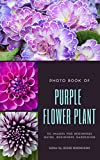 Photo Book of Purple Flower Plant