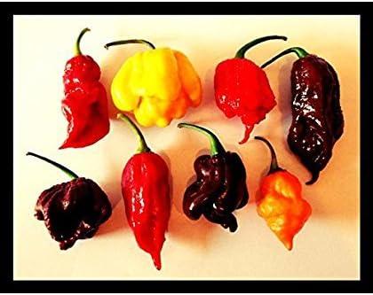 7 Sorten Teufelssch/ärfe Chili Sortiment