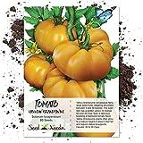 Seed Needs, Yellow Brandywine Tomato (Lycopersicon esculentum) 80 Seeds Non-GMO