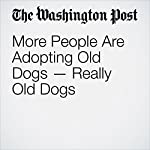 More People Are Adopting Old Dogs — Really Old Dogs | Karin Brulliard