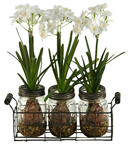 D & W Silks 165037 Paper Whites in Glass Jars in Metal Holder Clear/Green ()