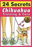 Chihuahua Training & Care: 24 Secrets
