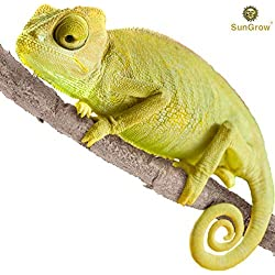 6 feet Animal Vine - Twistable, Bendable Branch - Creates Natural-Looking Habitat for Reptiles and Amphibians - Décor & Climbing Toy for Chameleons, Tree Frogs, Geckos - 5 Suction Cups Included