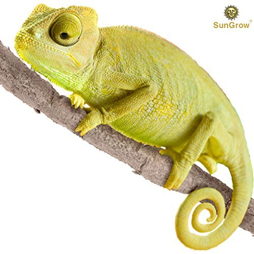 (6 feet Animal Vine - Twistable, Bendable Branch - Creates Natural-Looking Habitat for Reptiles and Amphibians - Décor & Climbing Toy for Chameleons, Tree Frogs, Geckos - 5 Suction Cups Included)