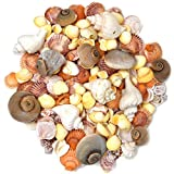 teeny tiny tank - 200 Sea Shells Bulk Mixed Beach Seashells - Shell in Various Assorted Sizes in Net Bags for Mermaid Party Decorations Decorative Under the Sea Crafts Supplies for Seashell Wedding Baby Shower Birthday