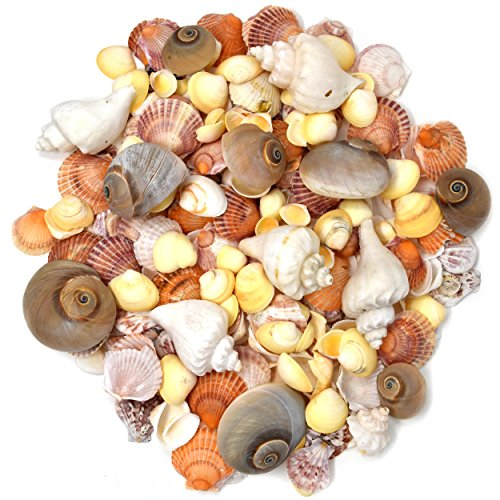 200 Sea Shells Bulk Mixed Beach Seashells - Shell in Various Assorted Sizes in Net Bags for Mermaid Party Decorations Decorative Under the Sea Crafts Supplies for Seashell Wedding Baby Shower Birthday