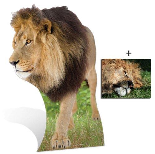 Lion - Wildlife/Animal Lifesize Cardboard Cutout / Standee / Standup - Includes 8x10 (20x25cm) Star Photo