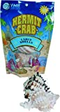 Shells for Hermit Crabs - Large - 2 pk