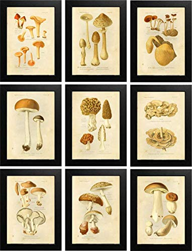 Ink Inc Botanical Prints Edible Mushrooms Vintage Drawings Wall Ar t - Set of 9-5x7 Matte Unframed ()