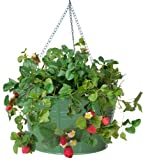 HIT 8495E SA Galvanized Heavy Gauge Steel Hanging Floral Herb Planter, 13.5 by 8-Inch, Sage Review