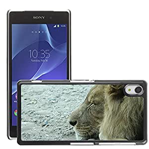 Hot Style Cell Phone PC Hard Case Cover // M00117008 Lion Cat Sleep // Sony Xepria Z2 L50W