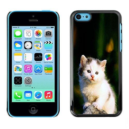 TaiTech / Case Cover Housse Coque étui - Cute Sad White Furry Fuzzy Kitten Cat - Apple iPhone 5C