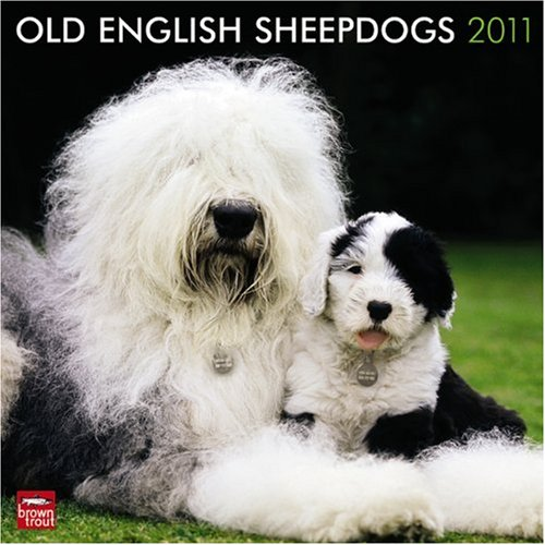 Old English Sheepdogs 2011 Square 12X12 Wall (English, Japanese and Spanish (Sheepdog 2010 Calendar)