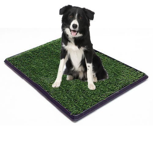 Replacement Grass (turf) for Dog or Cat Potty Trays - measures 20