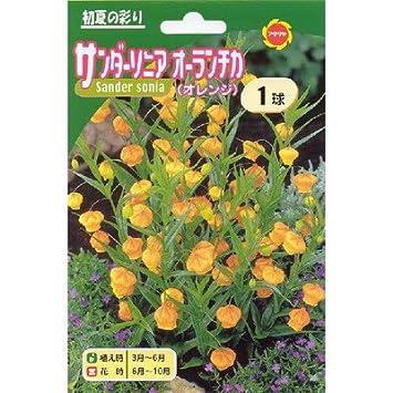 Amazon.co.jp: 春植え球根 サン...
