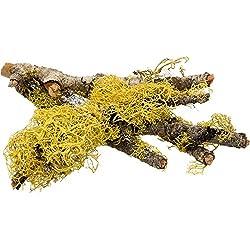 T-Rex Terra Accents Lichen Sticks, Brown / Green