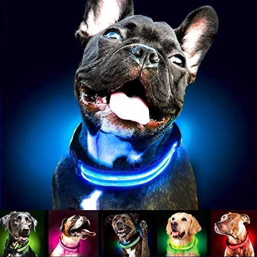 Shine for Dogs Ultimate LED Dog Collar – USB Rechargeable, Cable Included, 5 Awesome Colors. Ultra Bright, Durable, Made to Last. Make Your Dog More Visible at Night.