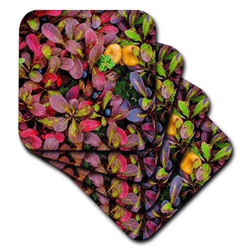 3dRose Danita Delimont - Natural Patterns - USA, Alaska, Dalton Highway. Alpine bearberry and crowberry. - set of 8 Ceramic Tile Coasters (cst_314436_4)