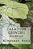 Caladium Growing: Notebook