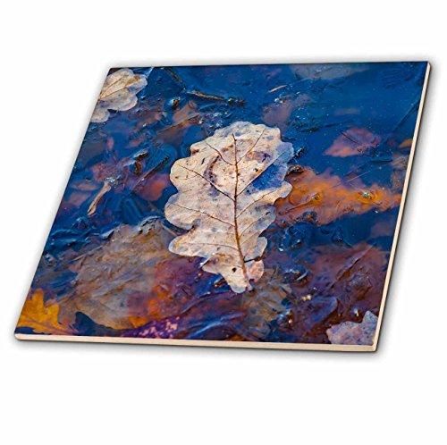 Oak Leaf Tile (3dRose Alexis Photography - Seasons Autumn 2 - Fallen oak tree leaf imbedded in ice of a pond. Late autumn season - 8 Inch Glass Tile (ct_272287_7))