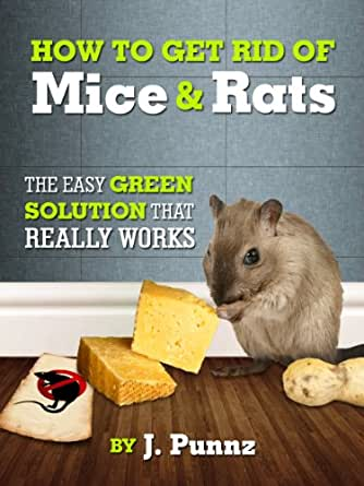 How To Get Rid Of Rats In The Backyard 28 Images How To Get Rid Of Mice Rats Organic