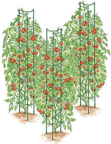 Gardener's Supply Company Green Tomato Ladders, Heavy Gauge Set of 3