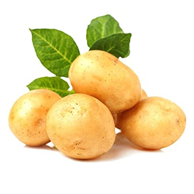 Oliote Organic Vegetable Seeds Bonsai Seeds High Germination Rare Potato Seeds Vegetables : Garden & Outdoor