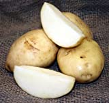 buy SEED POTATOES - 5 lb Kennebec * Organic Grown * Non GMO * Virus & Chemical Free * Ready for Spring Planting * now, new 2018-2017 bestseller, review and Photo, best price $12.50
