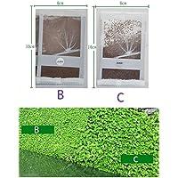 بذور نباتات مائية على شكل عشب ذو ورقتين صغيرة الحجم 10 غرام
