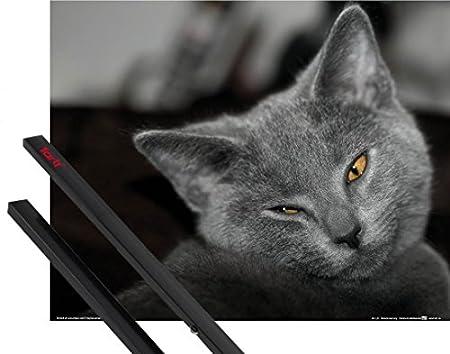 1art1 Gatos Póster (50x40 cm) Chartreux, Guiñada De Ojo Y 1 Lote ...