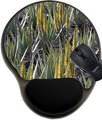 MSD Mousepad wrist protected Mouse Pads/Mat with wrist support design 31853425 Stain Resistance Kit Kitchen Table Top Desk C a Aloe Vera cactus Plantation the Island of Lanzarote on the Canary Islands