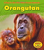 Orangutan (A Day in the Life: Rain Forest Animals)