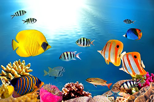 CHOIS Custom Films CF3039 Animal Fish Corals Colorful World Glass Window Frosted 3' W by 2' H by CHOIS