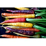 PlenTree Rainbow Blend Carrot (200Seeds) Mix Heirloom Non-GMO