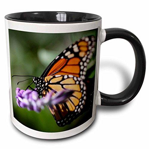 3dRose mug_200268_4 A colorful Monarch Danaus Plexippus butterfly. - Two Tone Black Mug, 11oz