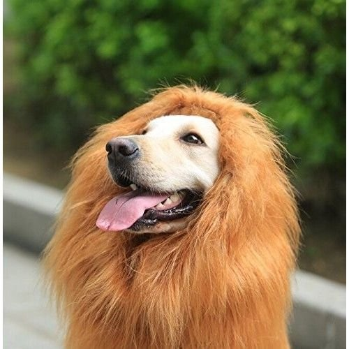 Lion Mane For Dog Costume (Furryfido Lion Mane -Lion Wig for Medium to Large Sized Dogs with Ears plus Gift [Lion Tail] Lion Wig for Dog— Halloween party fancy costume - Complementary Lion Mane for Dog Costumes (Brown))