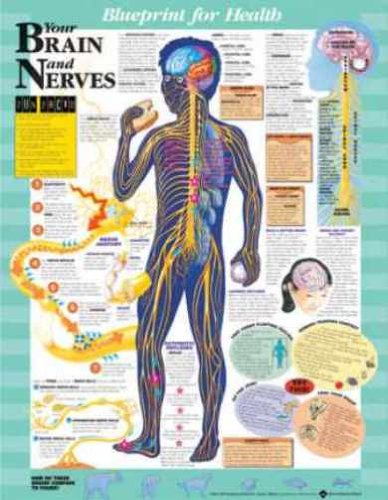 Amazon blueprint for health your brain and nerves chart blueprint for health your brain and nerves chart malvernweather Images
