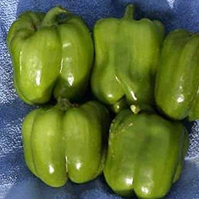 Cal Wonder Sweet Pepper Garden Seeds - Non-GMO, Organic, Heirloom Vegetable Gardening Seed