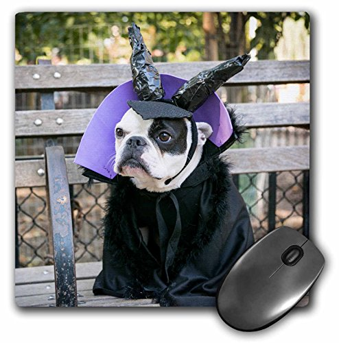 Danita Delimont - Halloween - New York City. Pet Halloween contest at Thompkins Square Park. - MousePad (Halloween Costume Photo Contest)