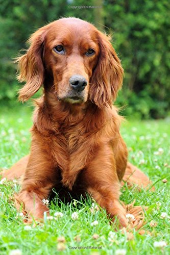 Read Online Gorgeous Copper Red Irish Setter Dog Journal: 150 Page Lined Notebook/Diary ebook