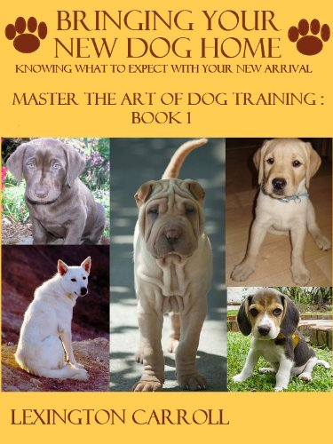 which training class is right for my dog?