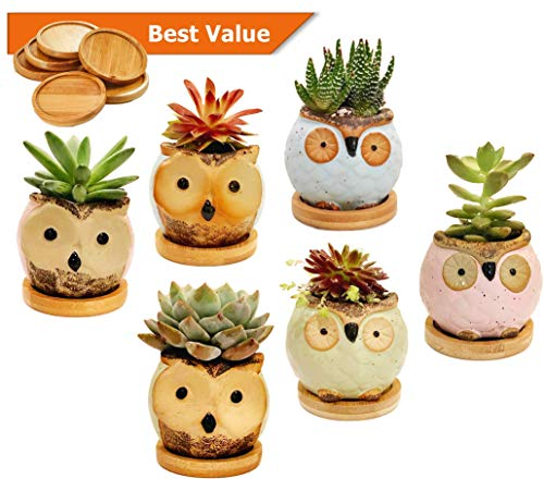 Chez JuJu Ceramic Owl Succulent Planter | Cute Mini Bonsai Glaze Pot | Perfect Gift for Best Friend Family Birthday Wedding Holiday Kid | Home Office Desktop Indoor Decoration | 6 Pack | Bamboo Saucer