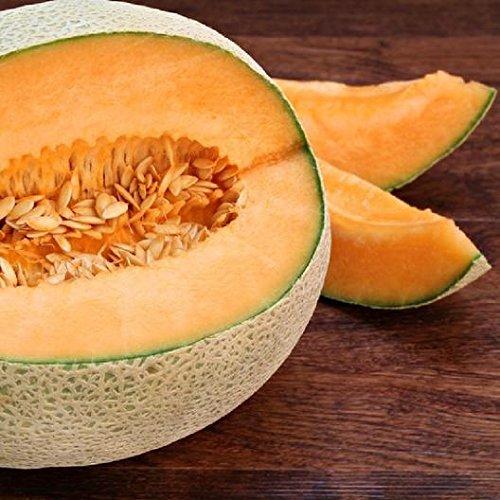 David's Garden Seeds Fruit Cantaloupe Top Mark 4421 (Orange) 50 Non-GMO, Heirloom Seeds (Cantaloupe Seeds)