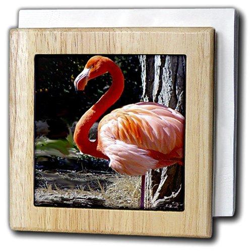 鳥 – Flamingo – タイルナプキンホルダー 6 inch tile napkin holder nh_579_1 6 inch tile napkin holder  B0073V9BPO
