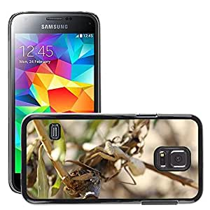 Hot Style Cell Phone PC Hard Case Cover // M00309963 Mantis Insect Bug Wildlife Praying // Samsung Galaxy S5 MINI SM-G800