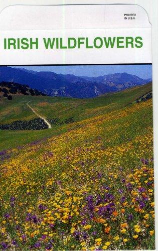(Set of 3 Irish Wildflowers Lrg Seed Packet)